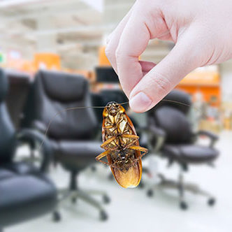 Hand holding cockroach in the shopping mall,eliminate cockroach in office equipment