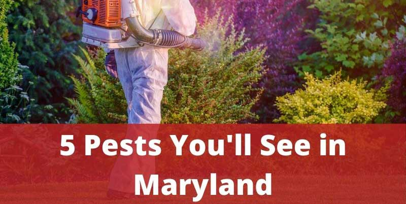 5 Pests You'll See in Maryland